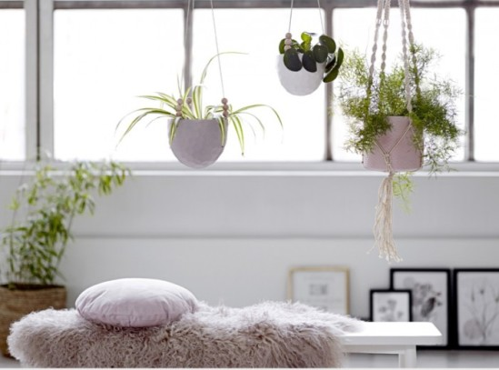 hanging-plants-housebeautiful-couk
