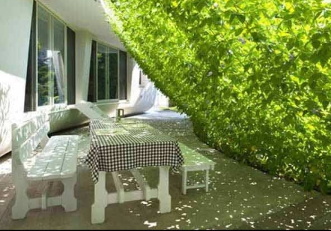 gardening viral.com1