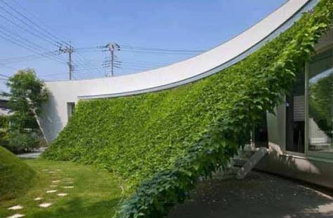 gardening viral.com2