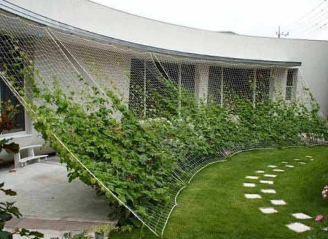gardening viral.com3