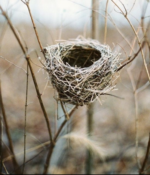 nature - tumblr-nest